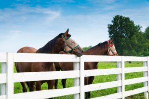 ranch fencing with horses